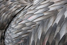 ♥ feathers / by Tanja Soeter