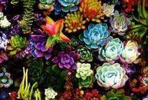 Gardening / by Cindy Beglin