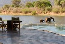 Africa / #1 on my bucket list
