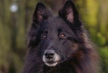 Fuzzies / dogs and cats (mostly German Shepherds ;) / by angie_rt