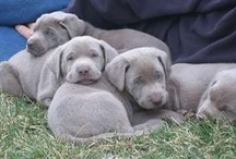 My heart melts for PUPPIES