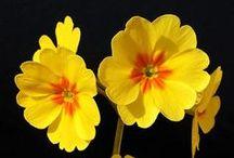 Flower...Pretty Flower / by Debbie Croell