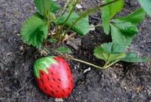 Kids - Gardening & Outdoors / Gardening and other Outdoor activities