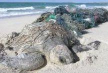 Plastic Pollution & Studies