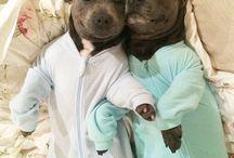 ✰ Cute animals / I want them all ....... / by ❥ ѕaraн elιzaвeтн