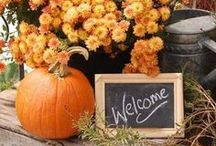 Fall Decorations Galore / Decorating with Pumpkins, Candy Corn, Gourds and More! / by The Great Atlantic & Pacific Tea Company