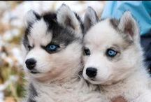 O-M-G PUPPIES!!?!??! / Good golly, the best of the youngin's
