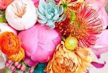 Poesia floreale / Il fiore perfetto è una cosa rara. Se si trascorresse la vita a cercarne uno, non sarebbe una vita sprecata (L'ultimo samurai)