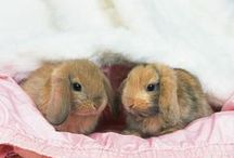 Bunnies, Rabbits & Hares / by Candie Vaughan