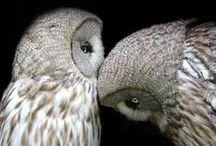 Owls / by Candie Vaughan