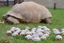 Turtles and Tortoises / by Candie Vaughan