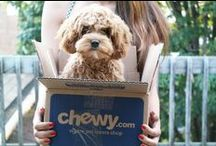 Send me to Chewy please! / From our friends in the blogging community! A continued thanks!!