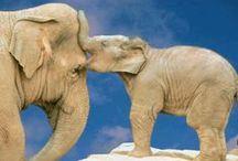 Elephants / by Candie Vaughan