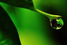 • green • / by carlita christian