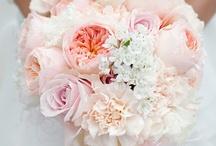 WEDDING / by Bo Hall