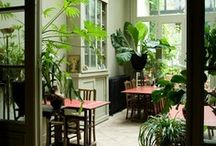 Indoor/Outdoor Gardening and Care / Ideas I've found on creating, and caring for indoor houseplants and indoor/outdoor gardens. / by Aida F. aka Sweety