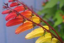 Rainbows / by Sarah Eaton