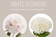 FLOWERS White, Ivory & Cream / Flower Varieties in White, Ivory & Cream / by Jennifer Mancuso