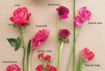 FLOWERS Pink / Flower Varieties in Pink, Hot Pink & Blush Pink / by Jennifer Mancuso