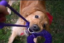 Dog Toys in Action / Everything you need to keep your pup stimulated.