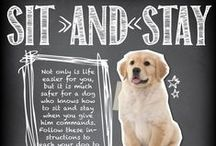 Puppy Parent Handbook / What to expect when you're expecting a new puppy! Everything you need to know and fun tidbits too.