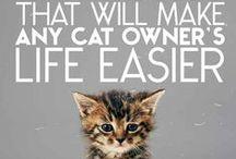 Cat Living