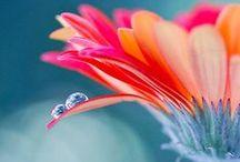 Flowers / by Mariana Diaz Grangeat
