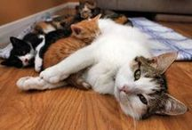Cats are Family / by Sophia Luc