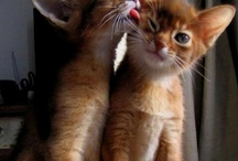 Cats / by Lori Milligan
