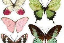 Illustration / by Kim Durocher Art & Illustration
