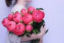 Peonies / Peonies ever and ever