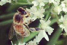 Nature, Flowers and insects. / My instagrampictures that I love!
