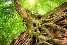 Earth Wisdom / For truly vibrant health and a high vibrational life, focus on the mind, body and spirit are all here.   Here you will find insight into spirituality, health, the soul, finding balance, and more... Everything is connected when it comes to truly aligning with fulfillment and happiness in your life!   #mindbodyspirit #spirituality #wellness