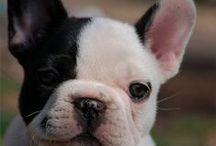Pets <3 / Fotos dos nossos melhores amigos!!