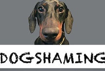 Dog Shaming / by Pawfect Interiors + Design & Home Staging