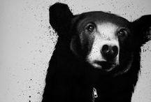 bear.bear