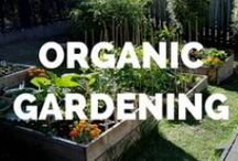 Organic Gardening / Grow organic food in your own backyard and support local farmers! We pin organic gardening tips, including how to grow urban gardens, backyard gardens, and patio gardens.