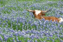 Texas / by Brooke Bednar
