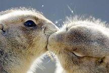Cute Animals / Pics that make me go awwwww