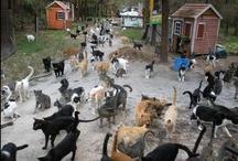 Animals <3 / by Katie Sidorowicz