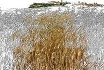 Agricooltour / Viaggi nell'Italia minore con la Maiuscola delle eccellenze e imprese agricole, strutture agrituristiche, bellezze di luoghi e territori presidiati dall'agricoltura, paesaggi agrari, vita rurale, produzioni e cucine tipiche, sapori dimenticati