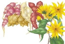perennial veggies & grains