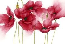 Drawing   Flowers & Plants / Ideas and tutorials on How to Draw Flowers, Plants and other botanicals
