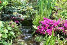 Garden / by MySushiSet.com