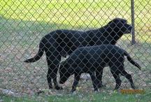 Dogs / My dogs. / by Jill Ramsey