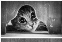 Pretty Kittys‿♡⁀°•.✿ ≧^◡^≦
