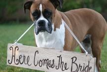 Weddings, Weddings, Weddings! / by Westin Chicago Northwest