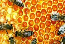 ☠ Backyard Bee's☠  / by Todd Alvey