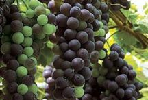 ☠GRAPES☠ / by Todd Alvey