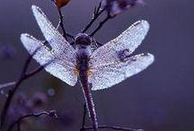 Dragonflies  / Tattoo ideas!!
